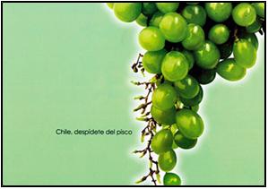 Racimo de uvas (Pisco peruano)
