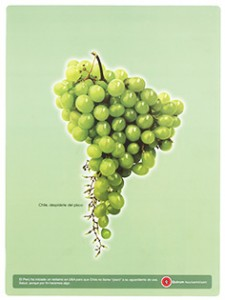 racimo-de-uva